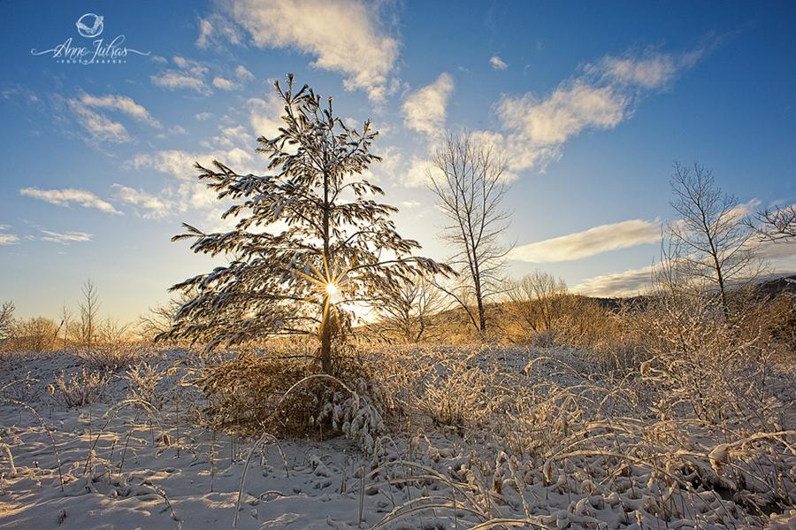 Photo de paysage : quel type de lumière favoriser |Contre-jour
