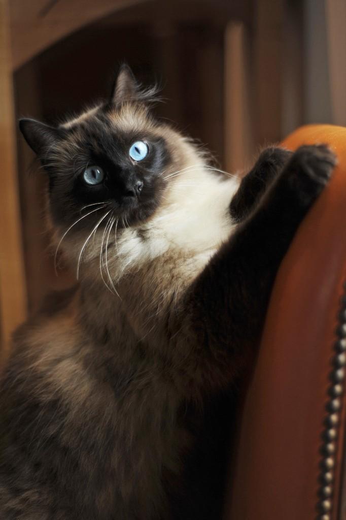photo de chat