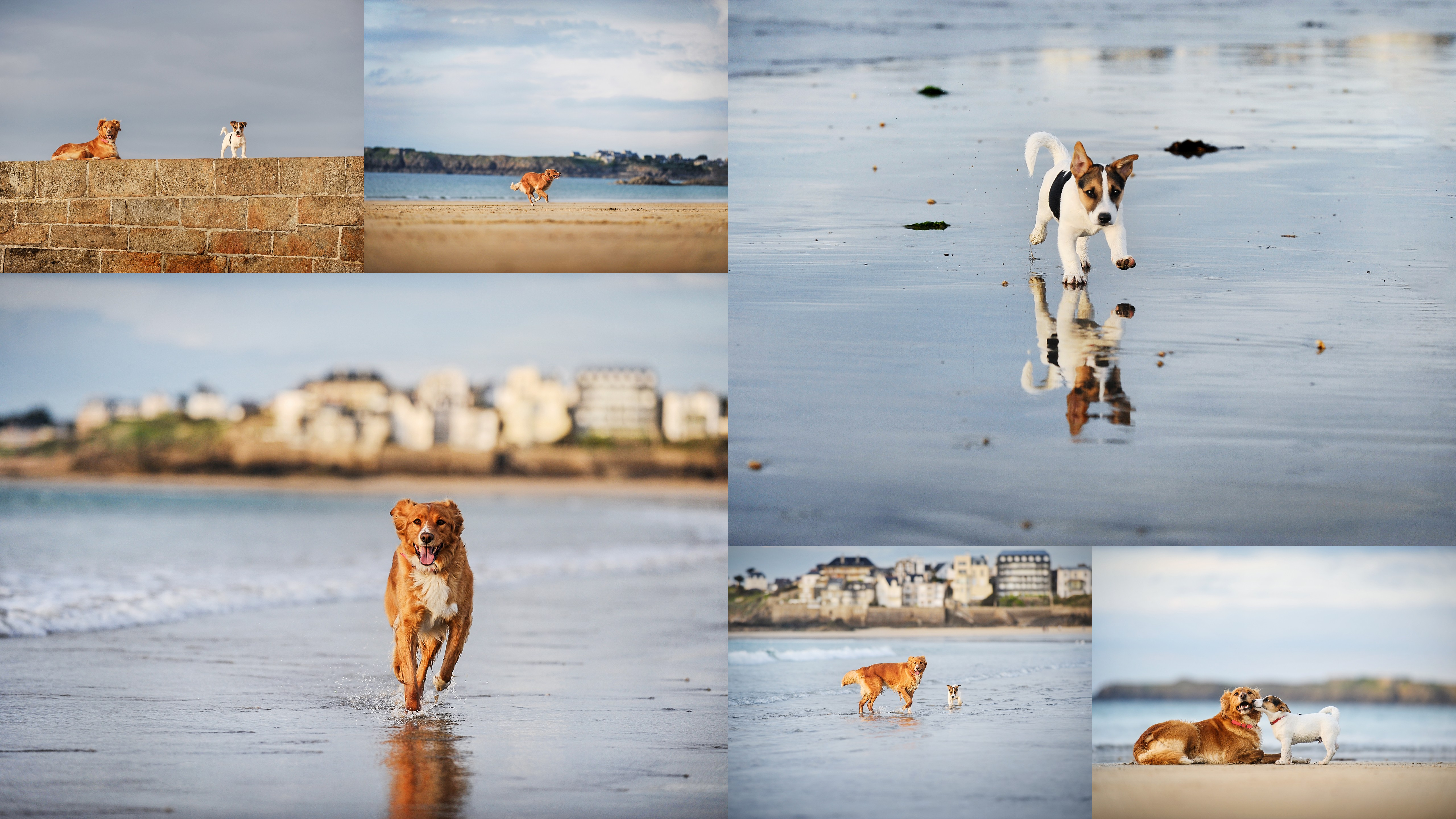 photo chiens plage Saint-Malo