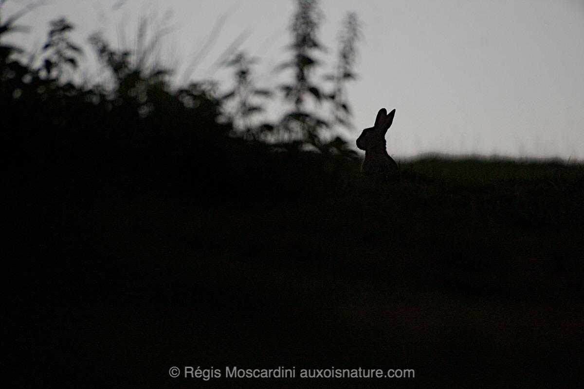 regis-moscardini-auxois-nature10