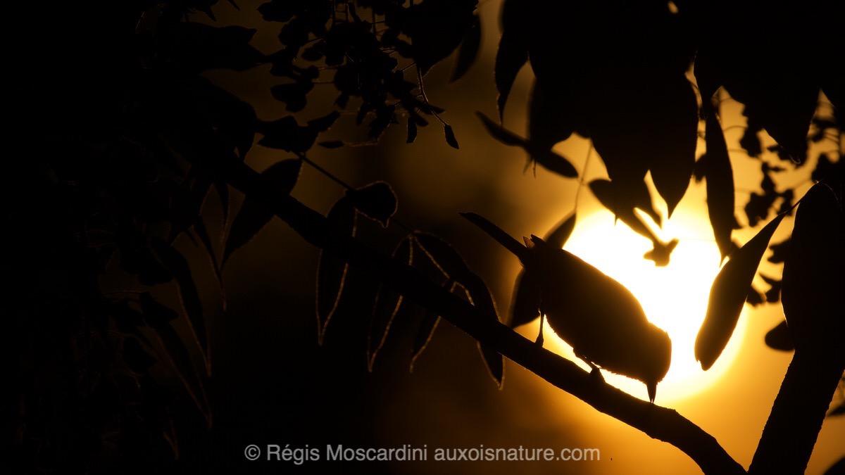 regis-moscardini-auxois-nature11