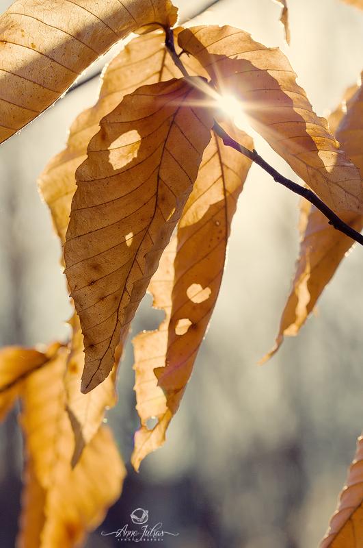 Soleil en étoile | Camoufler une partie du soleil