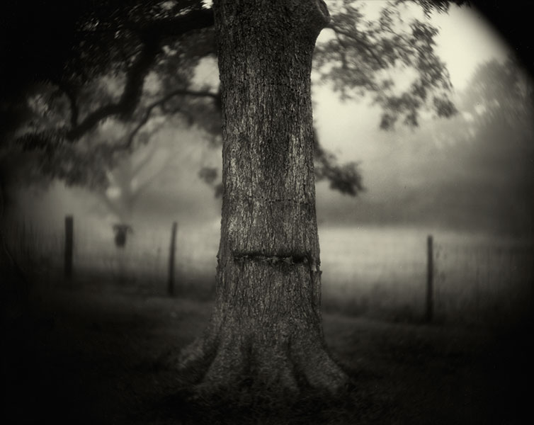 sally-mann-scarred-tree-deep-south-1998