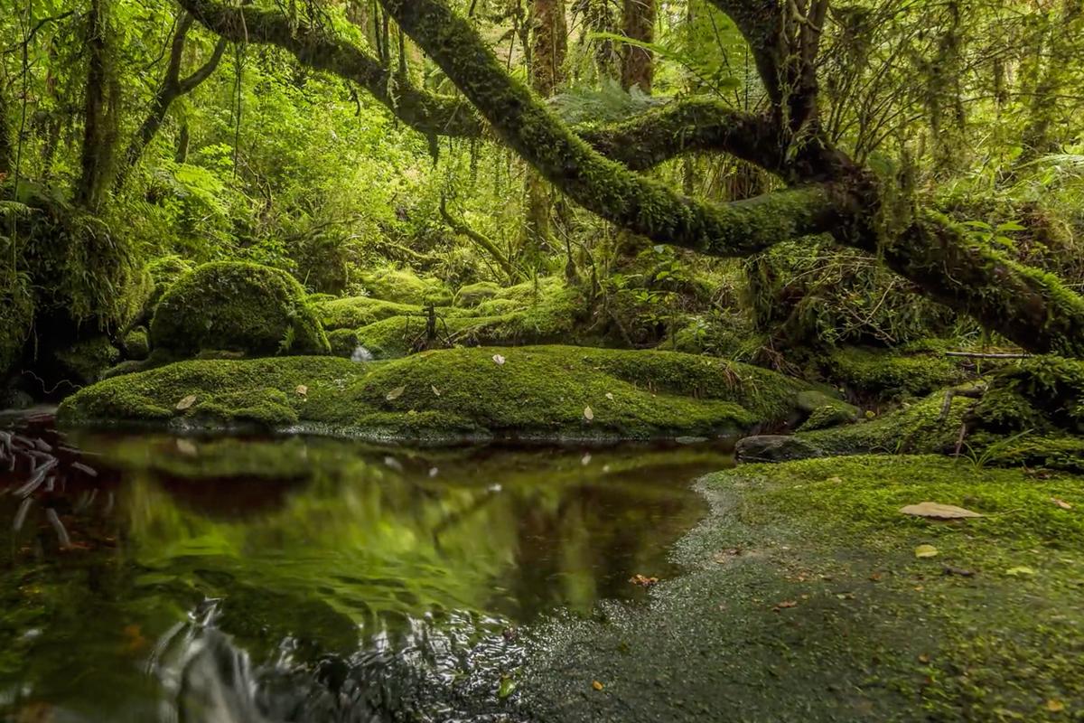 La Nouvelle Zélande en 4K… magnifique