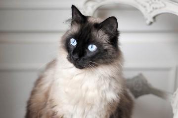 Réussir une photo de chat en appartement